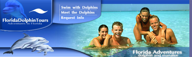 Swim with the dolphins in Florida