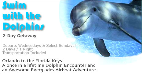 Swimming With Dolphins Dolphin Tours Swim With The